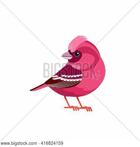 Rosefinch Bird Or Purple Finch Is A Bird In The Finch Family. Carpodacus Rubicilla, Haemorhous Purpu