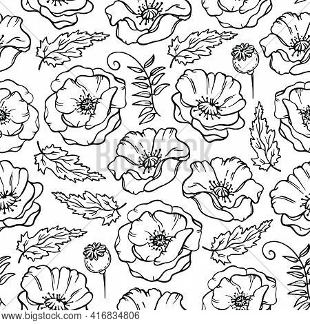 Poppy Meadow Monochrome Floral Sketch With Boll Flower Grass And Bud On White Background Botanic Car