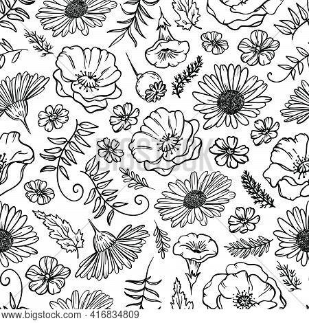 Flower Sketch Monochrome Chamomile Poppy With Grass And Bud On White Background Botanic Cartoon Seam