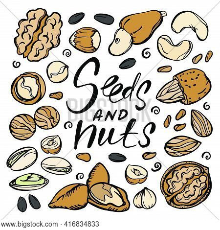 Seeds And Nuts Food Sketch With Pistachio Almond Seed Walnut Hazelnut Cashew With Text Clip Art Vect