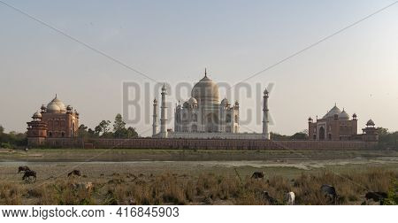Afternoon Wide View Of The Taj Mahal From Mehtab Bagh In Agra