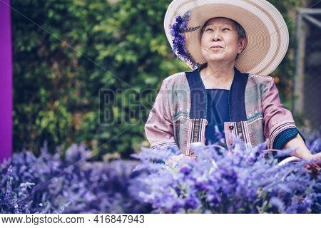 Asian Old Elderly Elder Woman Resting Relaxing In Lavender Flower Garden. Senior Leisure Lifestyle