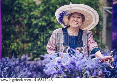 Asian Old Elderly Elder Woman Resting Relaxing In Lavender Flower Garden. Senior Leisure Lifestyle