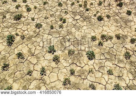 Desert Ground With Rare Small Plants. All Ground Covered With Cracks