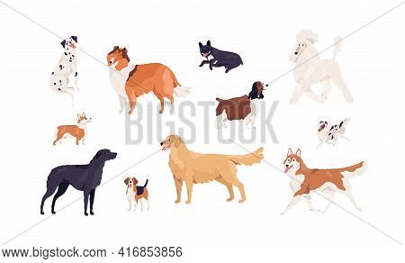 Dogs Of Different Canine Breeds Isolated On White Background. Doggy Pets Such As Royal Poodle, Frenc