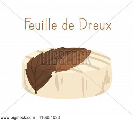 French Cheese Wheel Of Feuille De Dreux Decorated With Chestnut Leaf. Whole Head Of Gourmet Soft Che