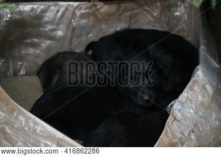 Black Puppys, Street Cute Pups, Adorable Small Dogs, Mongrel Pups, Homeless Sad Pups, Pets On Street