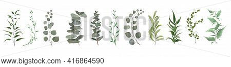 Vector Herbal Set. Various Plants, Leaves, Grass. Collection Of Greenery, Eucalyptus.