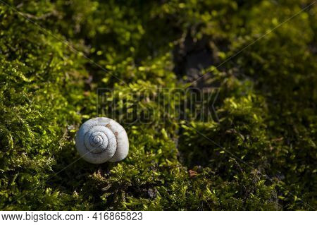 Snail Shell Lies On Green Moss. Empty Shell Of A River Snail Lying On A Moss Close-up. Bright Green