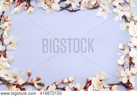 Frame From Sakura Flowers, Cherry Blossoms On A Purple Background. Copy Space. Top View, Flat Lay