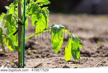 Young Plant Growing In Sunlight, Seeds Growing In Garden, New Life, Spring,baby Tree,gardening,seedi