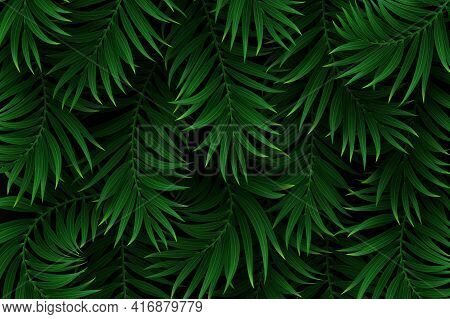 Exotic Tropical Background With Palm Leaves. Summer Jungle Design. Vector Illustration.