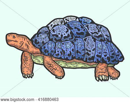 Animal Leopard Tortoise. Sketch Scratch Board Imitation Color.