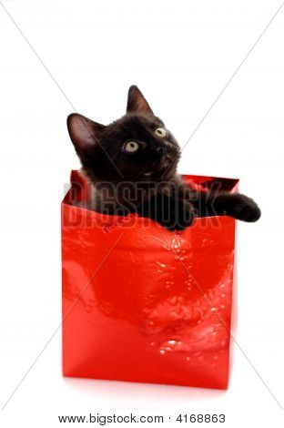 Kitty Gift