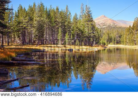 Sunrise. The forests are reflected in the smooth water of the lake. The Tioga Road and Pass in Yosemite Park. USA. North America