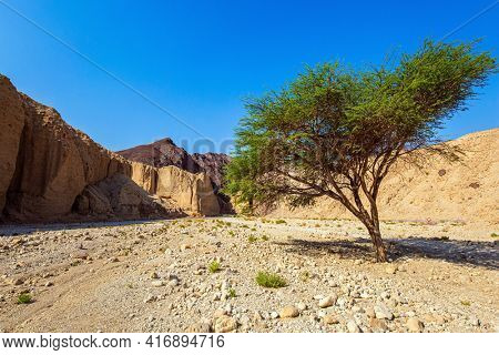 The beginning of the route. Entrance to the Black Canyon. Magnificent multicolored cliffs of the canyon. Blooming Green Tree - Desert Acacia