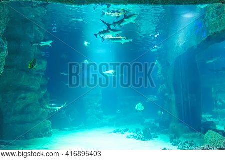 View Of The Aquarium With Fish And A School Of Sharks In The Aquarium
