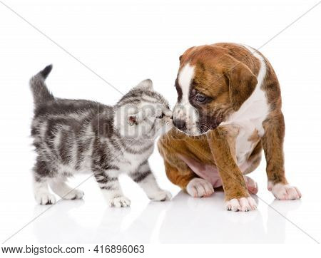 Cupel  Of Cat And Dog In Front Of White Background