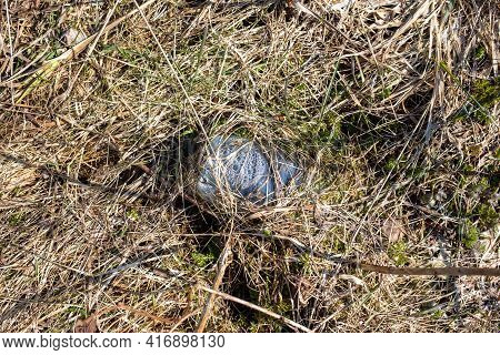 Discarded Plastic Trash In The Forest. A Plastic Bottle Left In The Forest Is Overgrown With Grass A