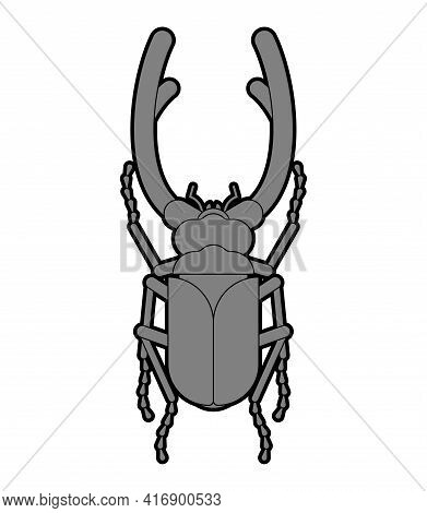 Stag Beetle Isolated. Beetle With Large Mandibles