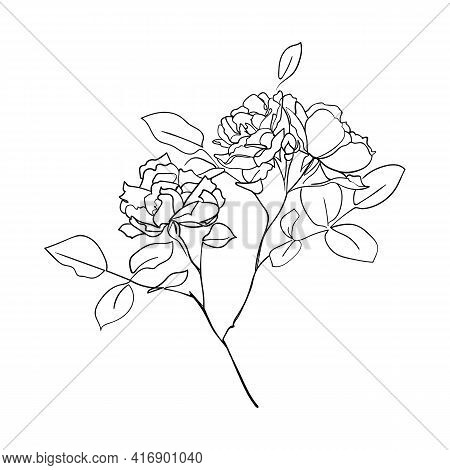 Roses Bush. One Line Drawing Art. - Vector Illustration