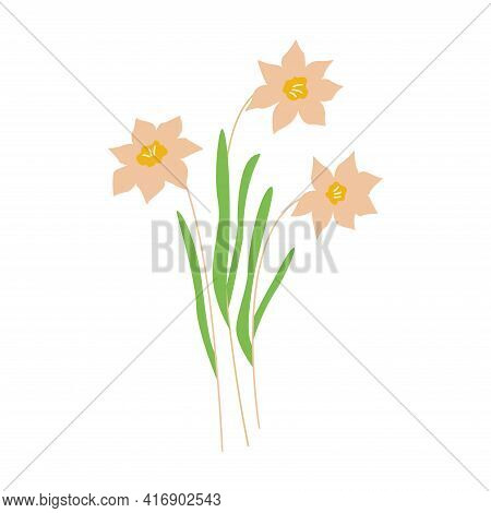 Daffodils Flowers. Three Narcissus Flowers. Colorful Hand Drawn Vector Illustration