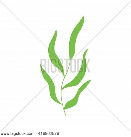 Deciduous Plant. Twig With Leaves. Colorful Hand Drawn Vector Illustration