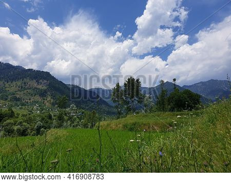 Landscape Green Beauty Paddy Fields,  Nature Landscaping. Plants Green Lands And Crop Fields Looks B