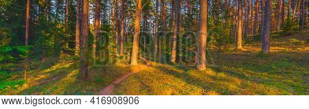 Wooded Forest Trees Backlit By Golden Sunlight Before Sunset With Sun Rays Pouring Through Trees On