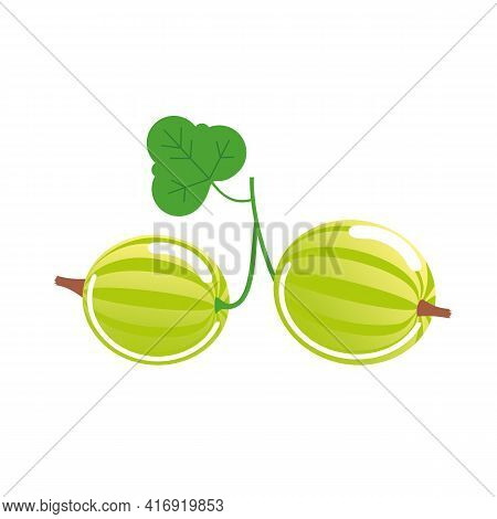 Branch With Two Green Gooseberries With A Leaf. Vector Isolated On White.