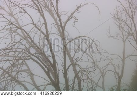 Dormant Leafless Tree With Bare Branches Surrounded By Dense Fog Taken In The Rural Countryside Duri
