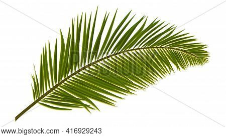 Green Realistic Palm Leaves Isolated On White. Palm Branch For Composing A Collage. Vector Illustrat