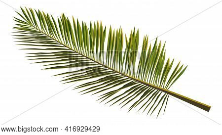 Colored Realistic Palm Leaves Isolated On White. Branch Of Palm Tree For Composing A Collage. Vector
