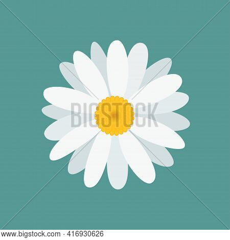 White Beautiful Chamomile Flower, Isolated On Blue Background. Top View. Vector Illustration.