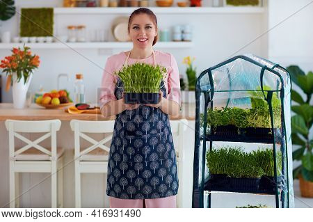 Organic Food Growing, Home Kitchen Gardening, Microgreen Sprout Greenhouse