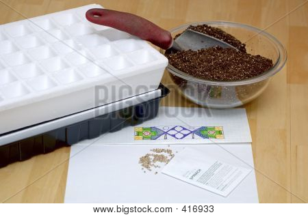 Gardening - Sowing Seeds