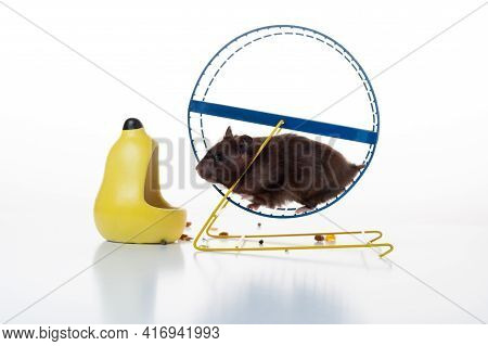 Hamster Running In A Wheel. Hamster Wheel And Feeder. Running Hamster.