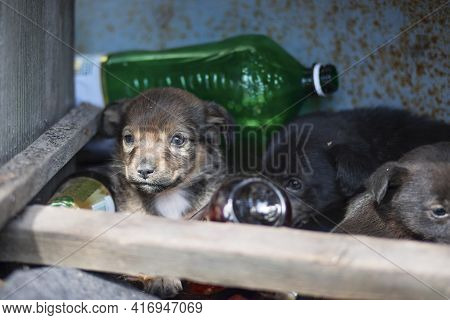 Small Homeless Puppies Outdoors. Homeless Dogs. Mongrel Puppies. Pups Of Mutt