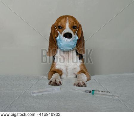 Beagle Dog Doctor In Mask Close Up