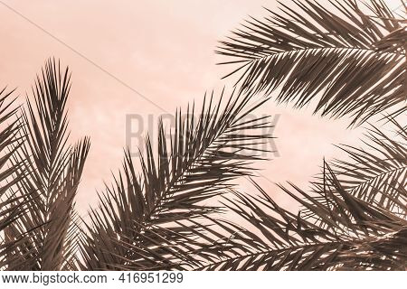 Tropical Tourism Paradise Palms In Sunny Summer Sun Orange Sky. Sun Light Shines Through Leaves Of P