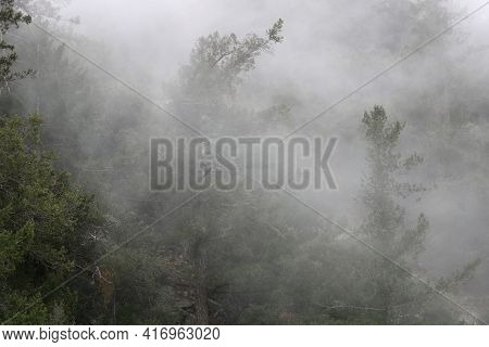 Fog Surrounding Pine Trees At A Lush Alpine Coniferous Forest During A Rain Storm Taken In A Tempera
