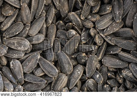 Roasted Salted Sunflower Seeds Close Up Background
