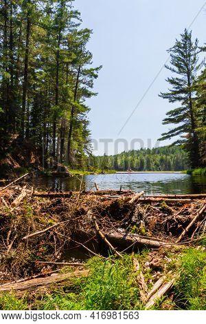 Beaver Dam At Beaver Pond. Beaver Pond Trail. Algonquin Provincial Park, Ontario, Canada,
