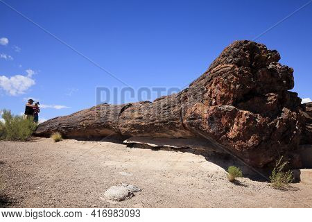 Arizona / Usa - August 01, 2015: Tourist Look A Petrified Tree Trunk In Petrified Forest National Pa