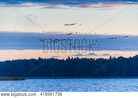Birds Flying Over A Lake At Evening Time, Beautiful Landscape At Summer Time Season. Horizontal Phot