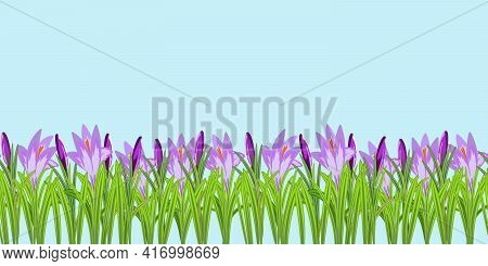 Crocus Flowers Seamless Pattern Vector Illustration. Crocuses With Buds, Petals And Stems Around On