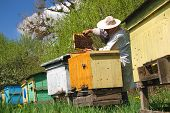 Beekeeper working in his apiary somewhere in Poland poster