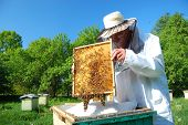Beekeeper working in his apiary in the summer poster