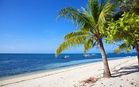 Palm Tree On White Sand Tropical Beach On Malapascua Island, Philippines