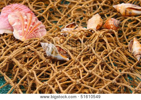 Sea shells and nets